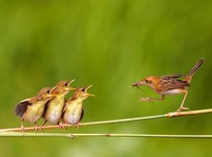 Poz Veren Kuşlar