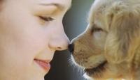 Evcil Hayvan Sağlığa Yararlı mı?