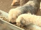 Sokaklar terk edilen hayvanlarla dolu: Satın alma, sahiplen