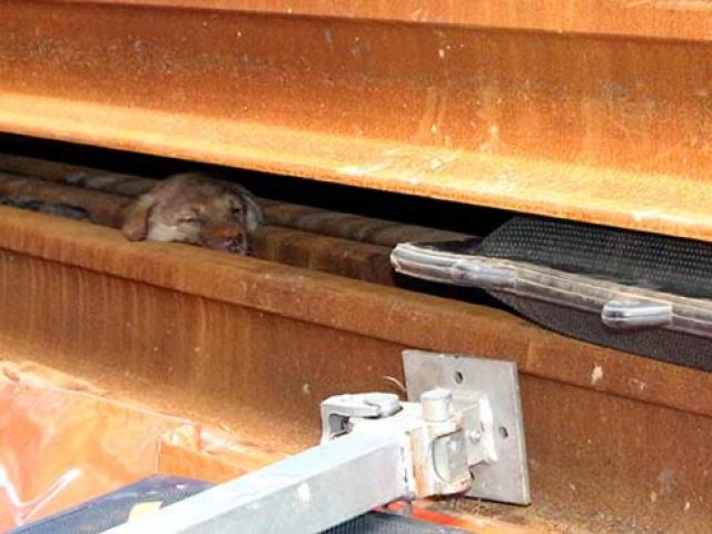 Rayların arasına sıkışan yavru köpekler iş makinesiyle kurtarıldı