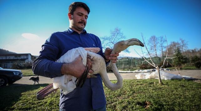 Evinde baktığı yaralı flamingoyu teslim etti