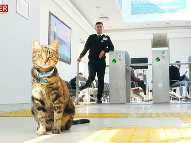 """Çanakkale İskelesi'ne gidenleri """"Kedi Miço"""" karşılıyor"""