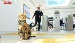 """Çanakkale İskelesine gidenleri """"Kedi Miço"""" karşılıyor"""