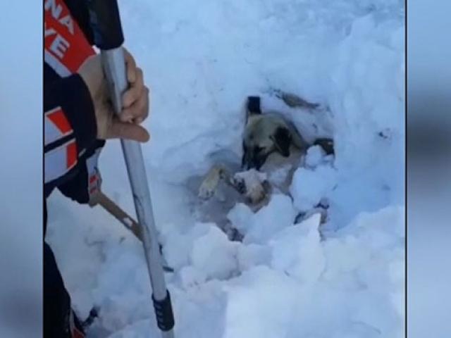 Üzerine kar kütlesi düşen köpeği itfaiye kurtardı