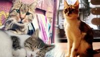 Esnafın en sıkı mesai arkadaşı; Kediler