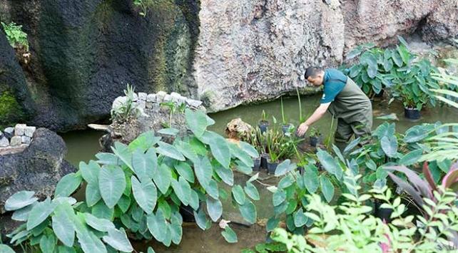 NASAnın oksijen deposu bitkileri Konyada yetiştiriliyor
