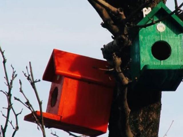 Akyazı sokakları rengarenk kuş yuvalarıyla süslendi