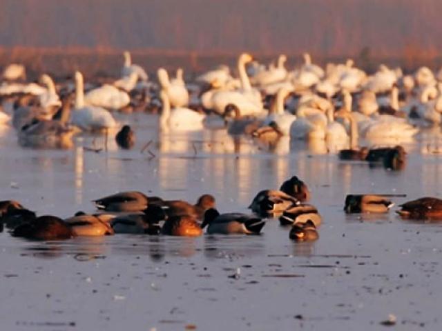 Edirnedeki Gala Gölü ekoturizm merkezi olmaya aday
