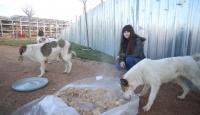 İlkokul öğrencisi Tuana'nın notaları sokak hayvanlarının yüreğini ısıtıyor