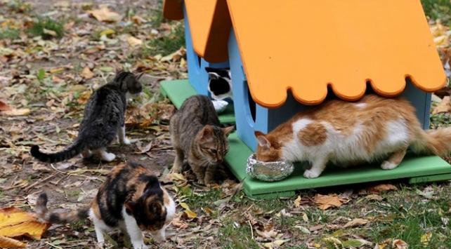 Sokak kedilerine mama alıp cezadan kurtuldu