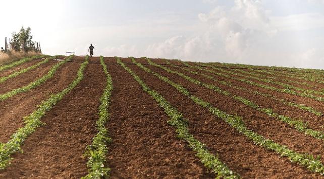 Türkiye tarımda Avrupa birincisi