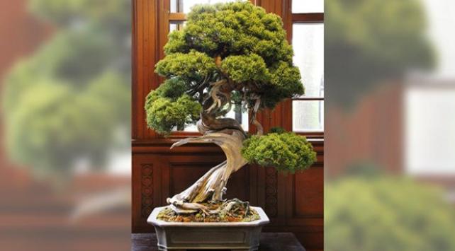 Ağaçları çalınan japon çiftten hırsızlara çağrı: Haftada bir sulayın