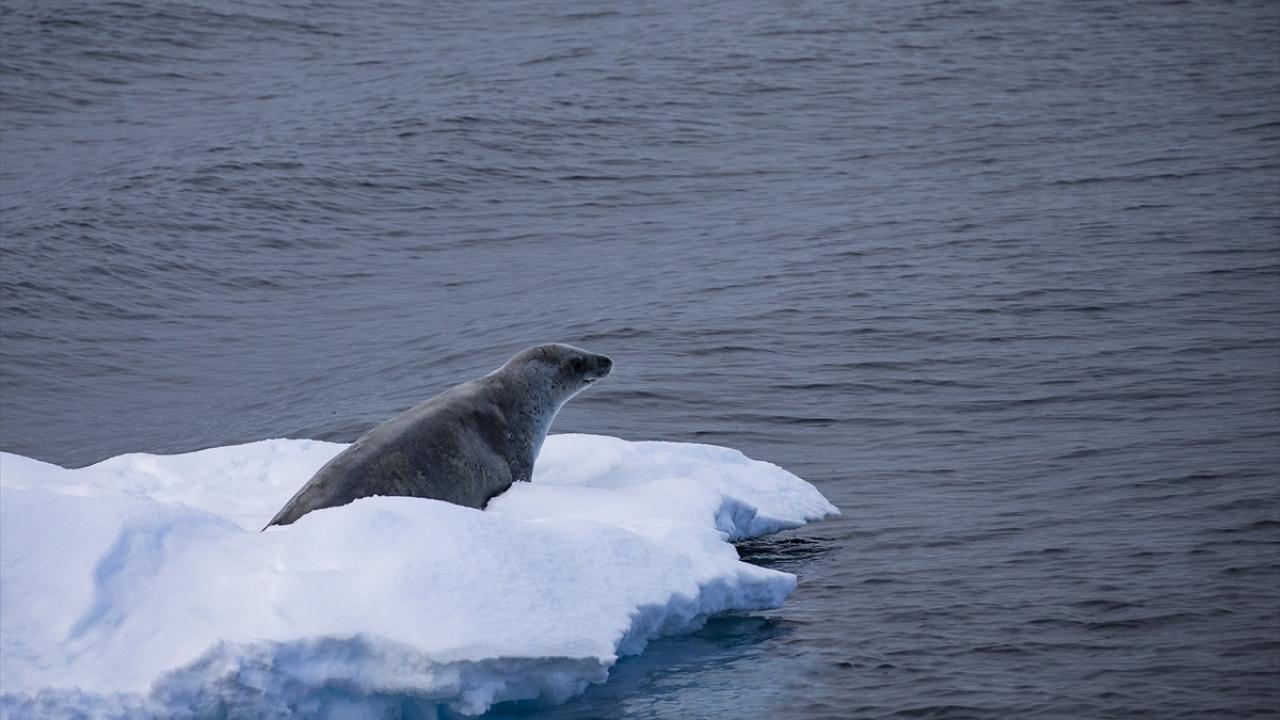 """Bilim ve barış kıtası Antarktikada """"araştırma"""" yarışı"""