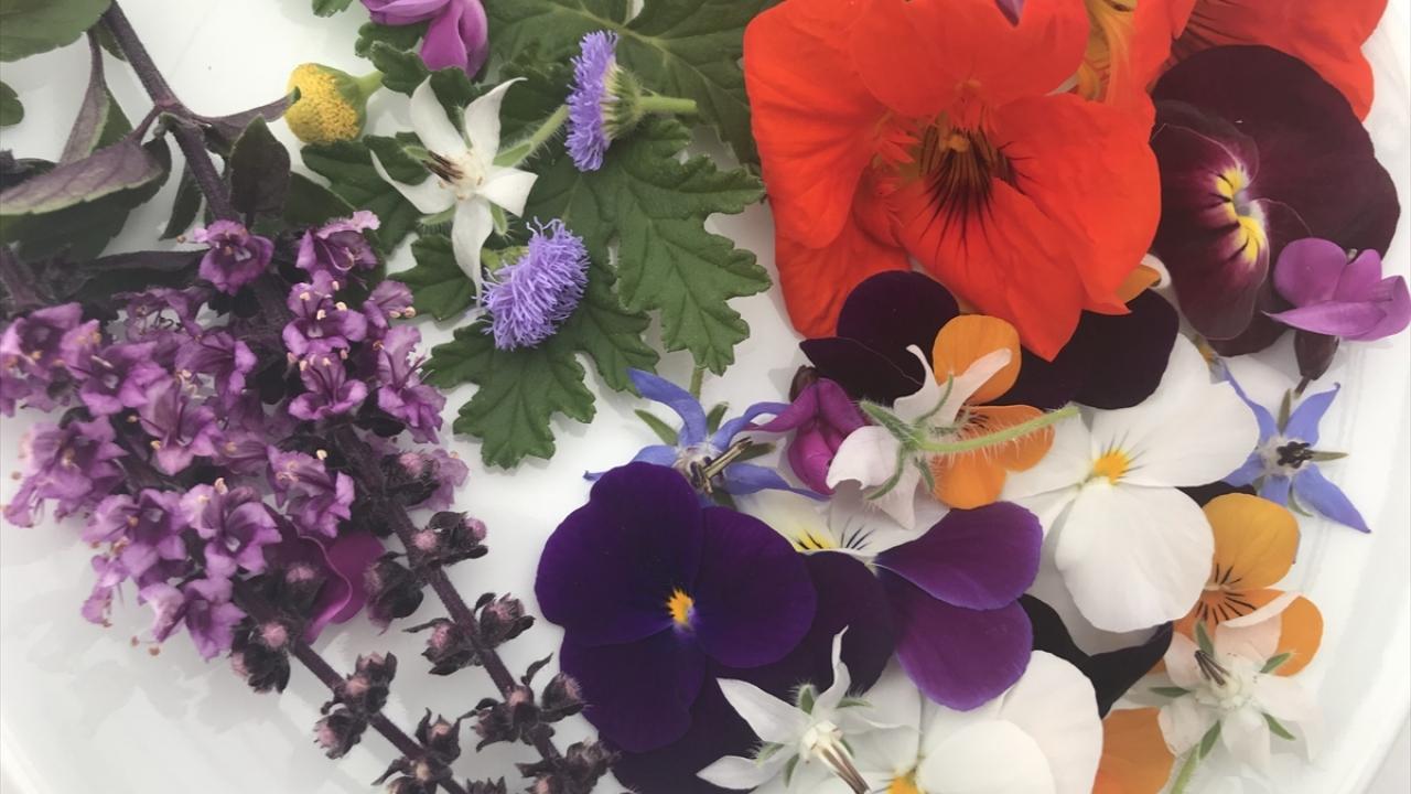 Sevgiliye hem göze hem damağa hitap eden çiçek