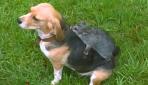 """Sevimli köpek Mollynin dostu terk edilmiş """"keseli sıçan"""""""