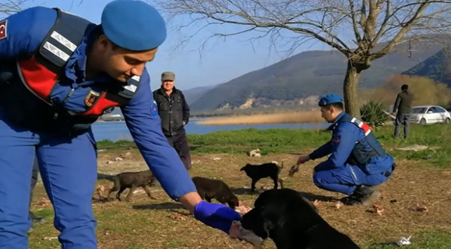 Mehmetçik görev yaptığı yerlerde hayvanları besliyor