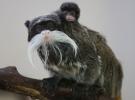 Bursa hayvanat bahçesinin nüfusu arttı