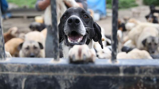 Hayvanlara kötü muamele ve işkence Meclis gündemine geliyor
