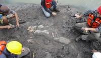 Bilim insanları yanlışlıkla 20 milyon yıllık deniz ineği kalıntısı buldu