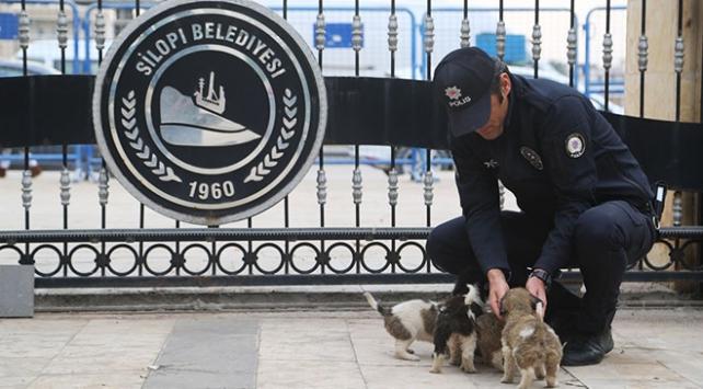 Köpek yavrularına polis şefkati