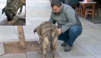 Kadıköy'deki pastane sokak köpeklerinin uğrak yeri oldu