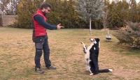 Oyuncu köpekler filmlerde her rolün üstesinden geliyor