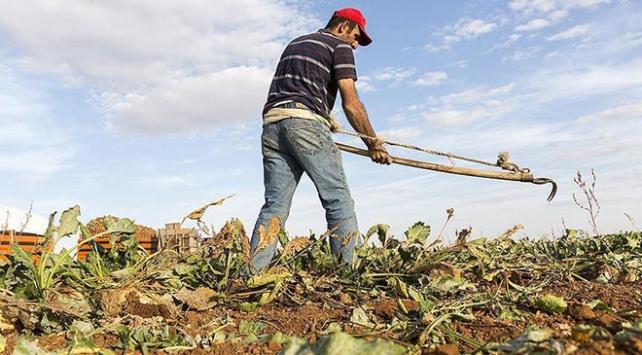 Türkiye, tarımsal hasılada Avrupada birincisi