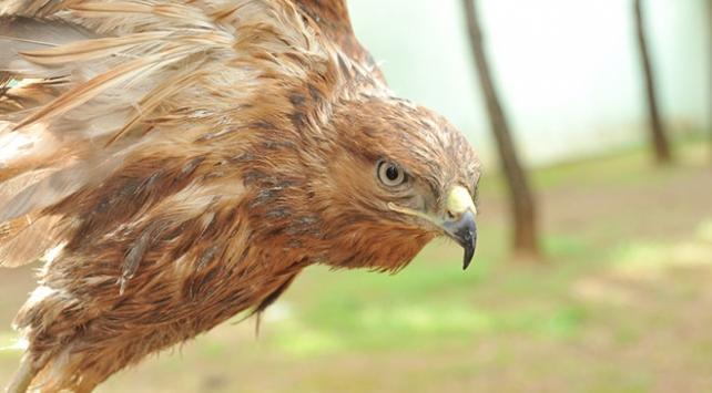 Yaralı kuşlar Gaziantep Hayvanat Bahçesinde şifa buluyor