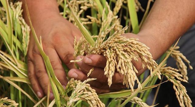 Bakan Pakdemirliden çiftçiye müjde: TMO fiyatı yükseltecek