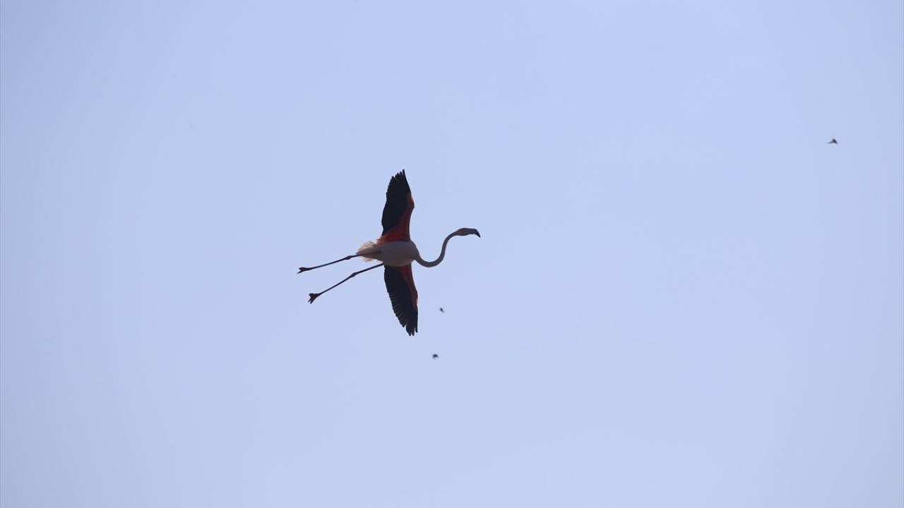 Trakyanın kuş cennetinde popülasyon artıyor