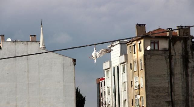 Elektrik kablosuna takılan martı saatler sonra kurtarıldı