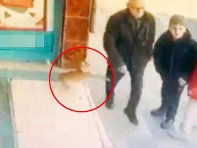 Marketin önünde bekleyen kedi erkeklere ve köpeklere saldırıyor