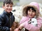 Minikler kuzuların anneleriyle buluşmasına tanık oluyor