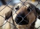 Tahran'dan sonra Ahvaz'da da köpek gezdirmek yasaklandı