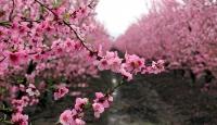 Baharın başlangıcı kabul edilen bayram: Nevruz
