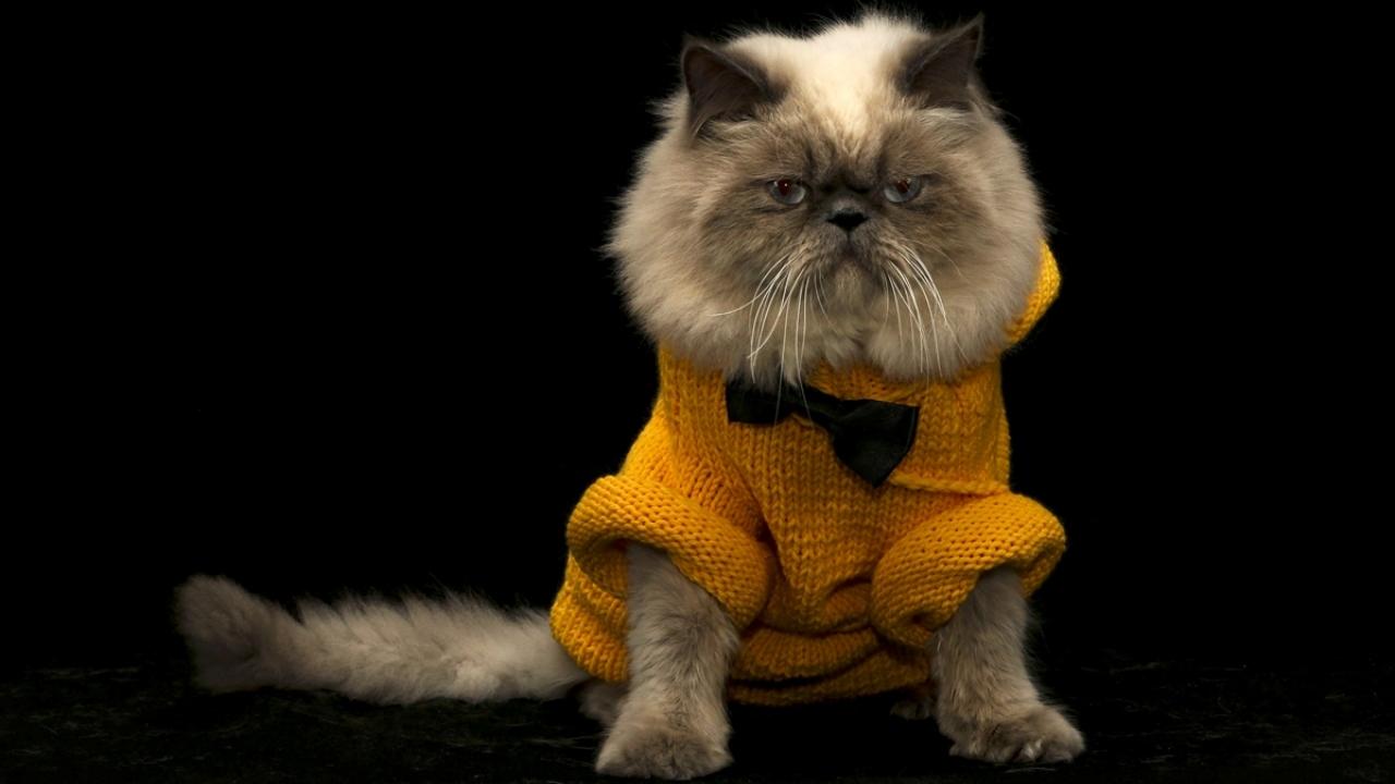 Sahiplerinin el emeğiyle süslenen kediler