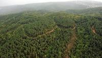 Türkiye'nin orman varlığı 22,6 milyon hektarı geçti