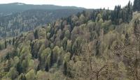 Orman zararlılarıyla mücadele için 8 milyon lira harcandı
