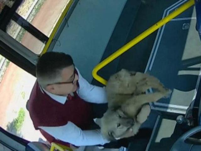 Midibüs şoförünün yaralı köpeği yaşatma çabası güvenlik kamerasında