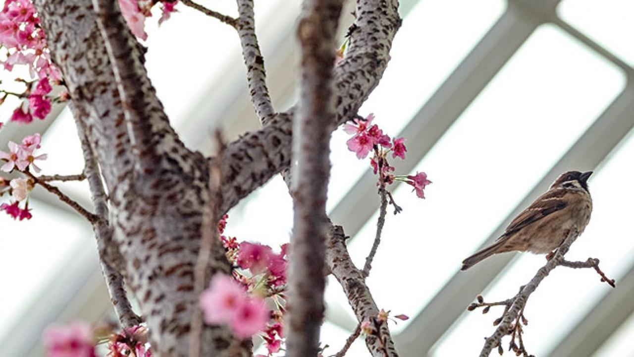 """Doğanın lila rengiyle süslendiği """"sakura"""" günleri"""