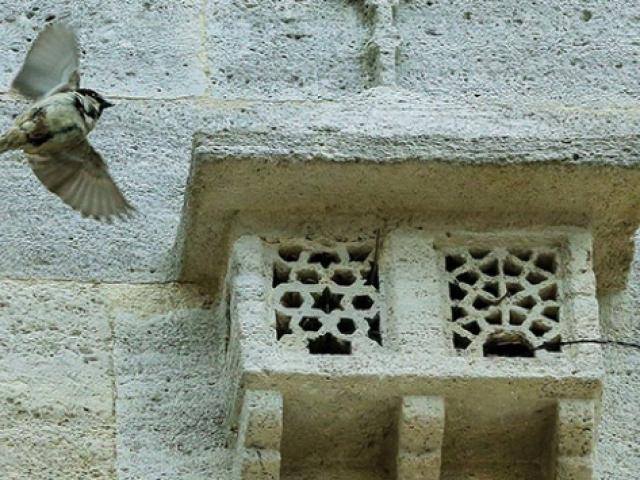 """Türk mimarisinin zarif detayı """"kuş evleri"""""""