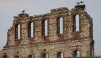 Tarihi hastane duvarının kanatlı misafirleri