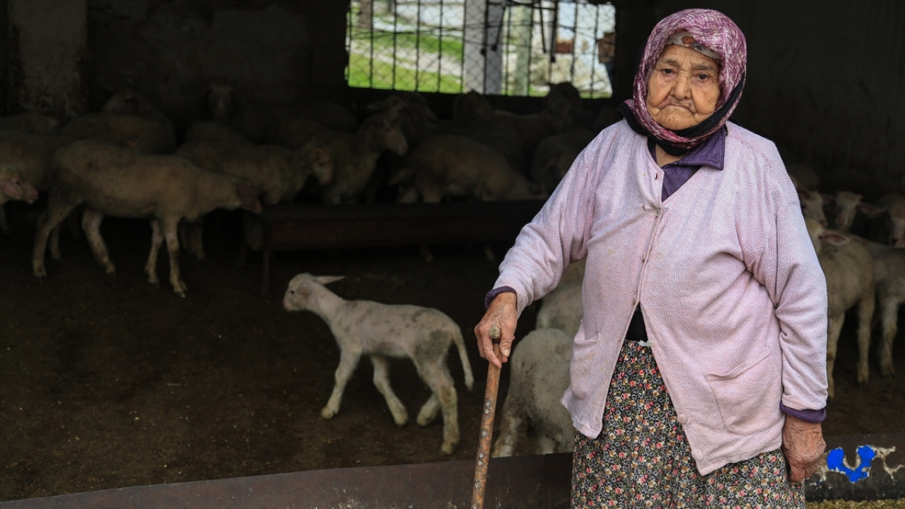 102 yaşında tarlada gençlere taş çıkarıyor