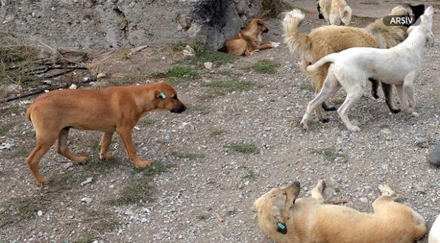 Yemek verdiği köpeklerin saldırısına uğradı