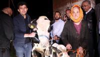İneği için gözyaşı döken kadına Tarım ve Orman Bakanı'ndan hediye
