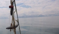 Van Gölü'ne tekneyle açılan balıkçılar inci kefali avlıyor