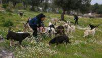 Gönüllüler ormana bırakılan sahipsiz köpeklerin bakımını üstlendi
