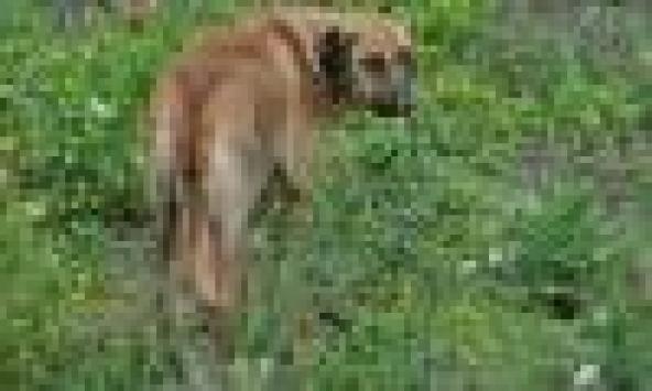 Köpek yavrularını ezdiği ileri sürülen öğretmene soruşturma