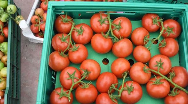 Rusyaya domates ihracatı 5e katlandı