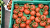 Rusya'ya domates ihracatı 5'e katlandı